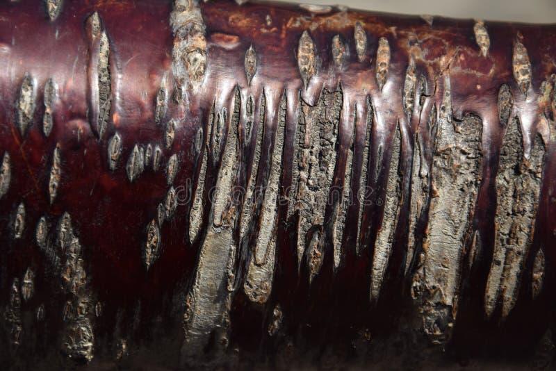 Brzoskwini drzewna barkentyna zdjęcia stock