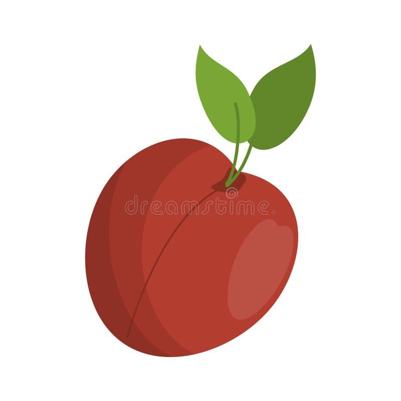 Brzoskwini owoc świeża żywność ilustracja wektor
