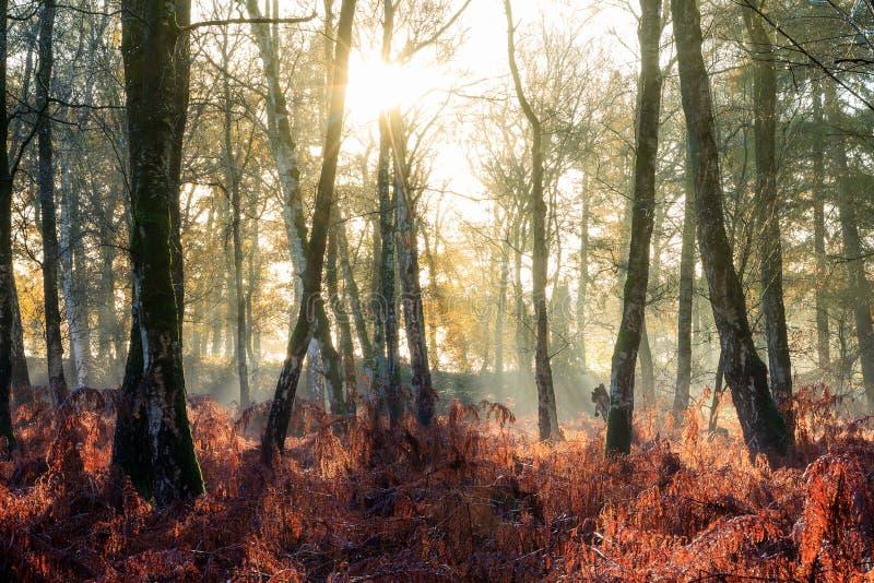 Brzoz drzew wschód słońca zdjęcia royalty free