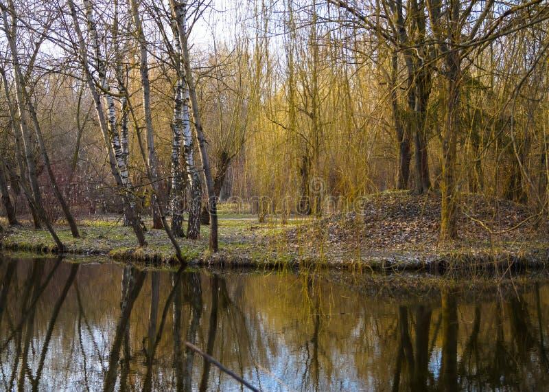 brzoz drzewa na wyspie po środku wody zdjęcia royalty free