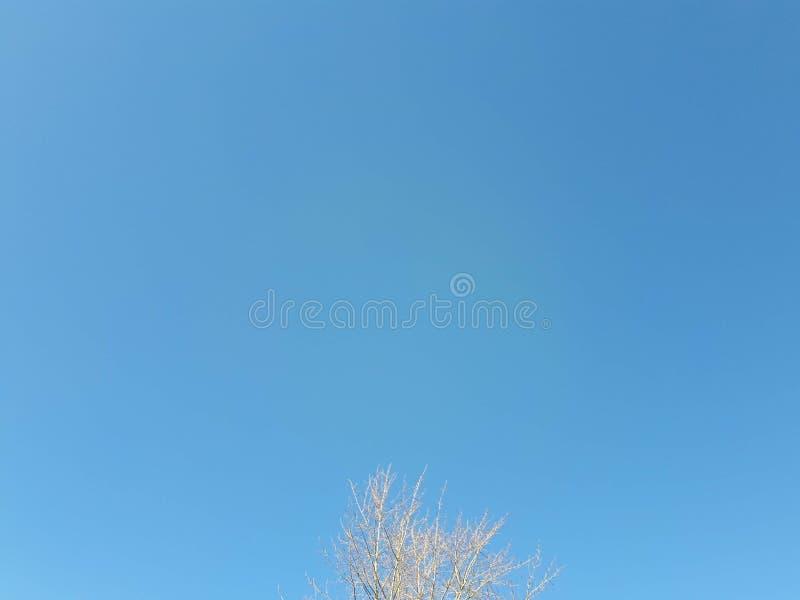 Brzoza bez liści przeciw niebieskiemu niebu zdjęcia royalty free
