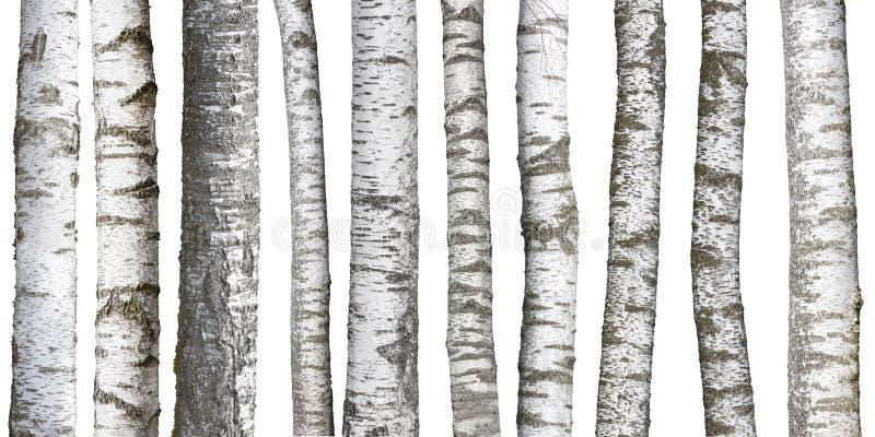 Brzoza drzewni bagażniki na bielu fotografia stock