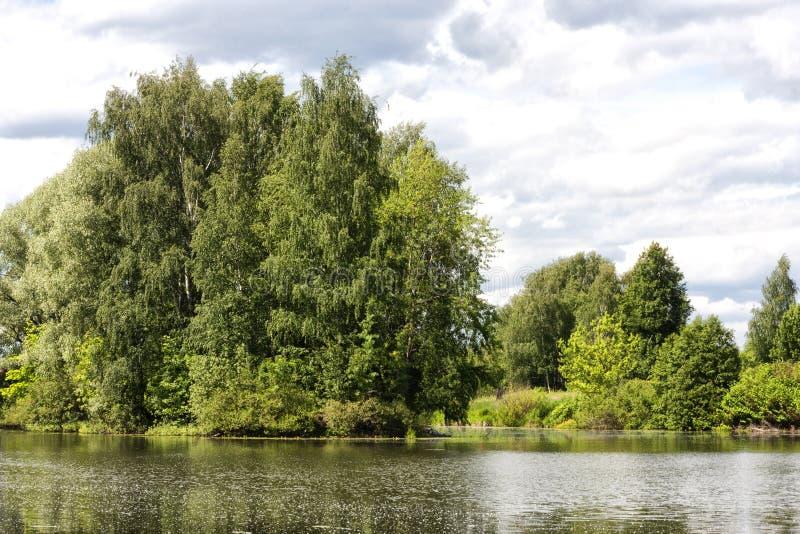 Brzoza na banku rzeki obrazy stock