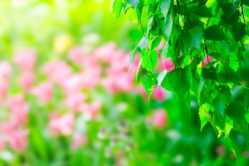 Brzoza tulipanu i drzewa kwiaty zdjęcia stock