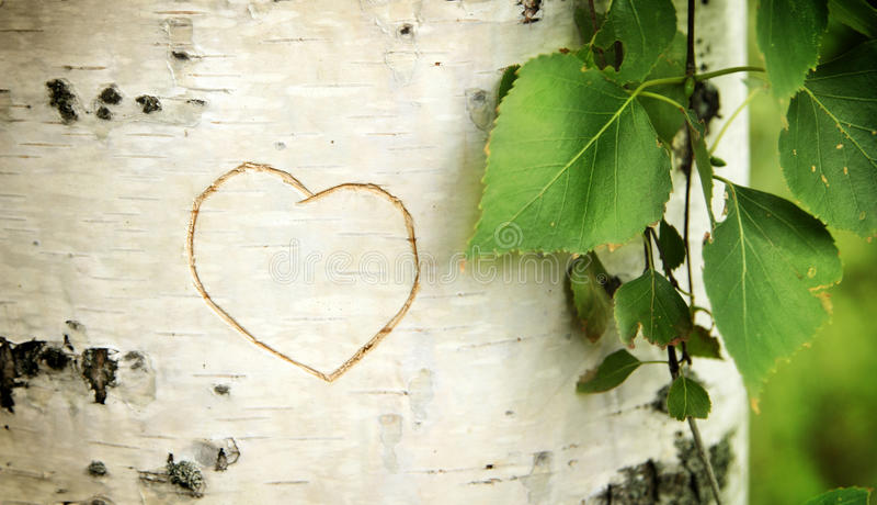 brzoza wyginający się serce zdjęcie stock