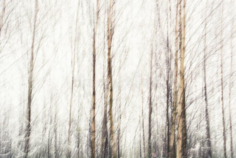 Brzozy abstrakcjonistyczne zdjęcie royalty free