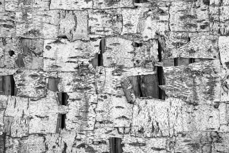 Brzozy barkentyny tekstura, abstrakcjonistyczny tło obraz royalty free