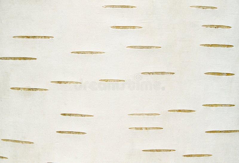Brzozy barkentyny tekstury tło fotografia stock