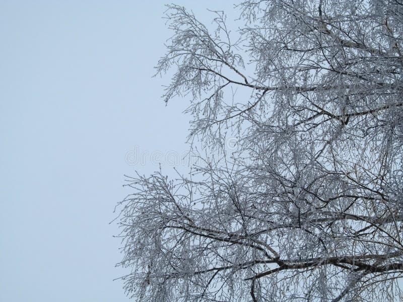 Brzozy drzewa korona w hoarfrost przeciw tłu bławy, prawie biały zimy niebo, Geometryczny tło sumiasty cienieje obrazy stock