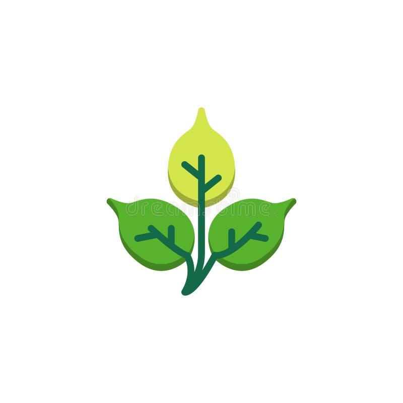 Brzozy drzewa liścia mieszkania ikona ilustracji