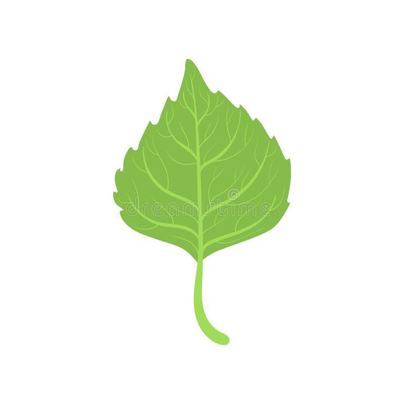 Brzozy drzewa zieleni liścia wektoru ilustracja ilustracja wektor