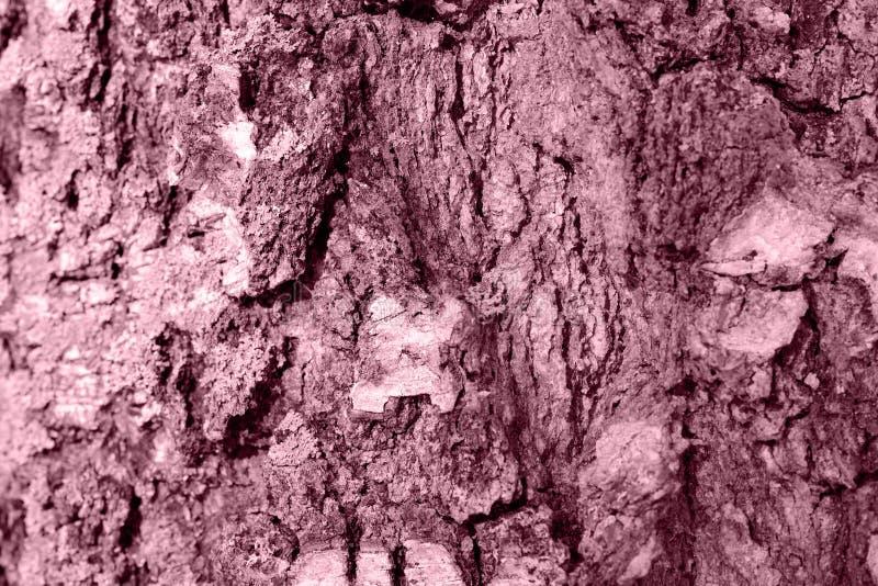 Brzozy drzewnej barkentyny tekstura Stonowany naturalny t?o zdjęcia stock