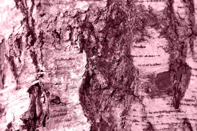 Brzozy drzewnej barkentyny tekstura Stonowany naturalny t?o obrazy stock