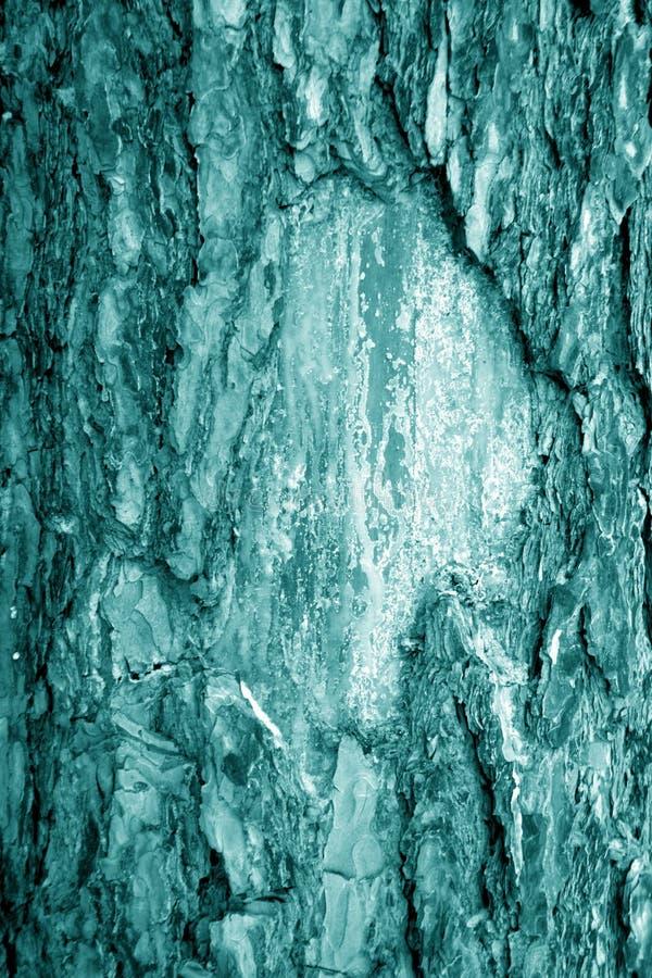 Brzozy drzewnej barkentyny tekstura w cyan brzmieniu zdjęcie royalty free