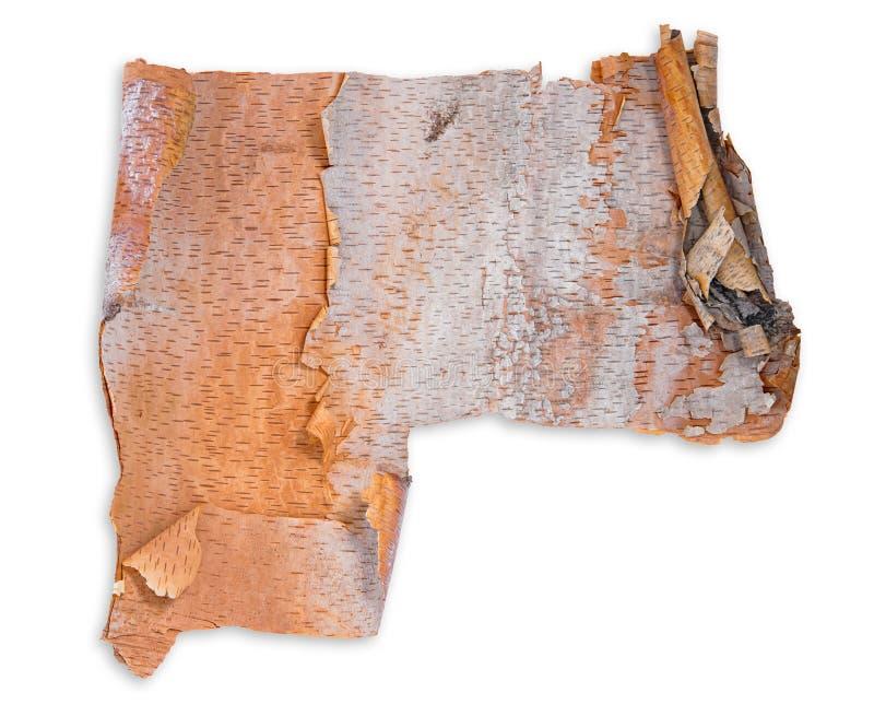 Brzozy drzewnej barkentyny tekstury tło obraz royalty free