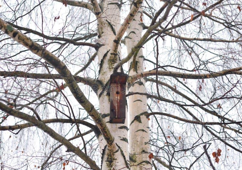 Brzozy drzewo bez liści fotografia royalty free