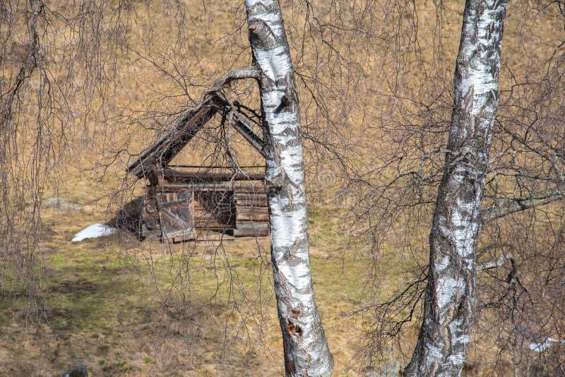 Brzozy drzewo i kabina zdjęcia royalty free