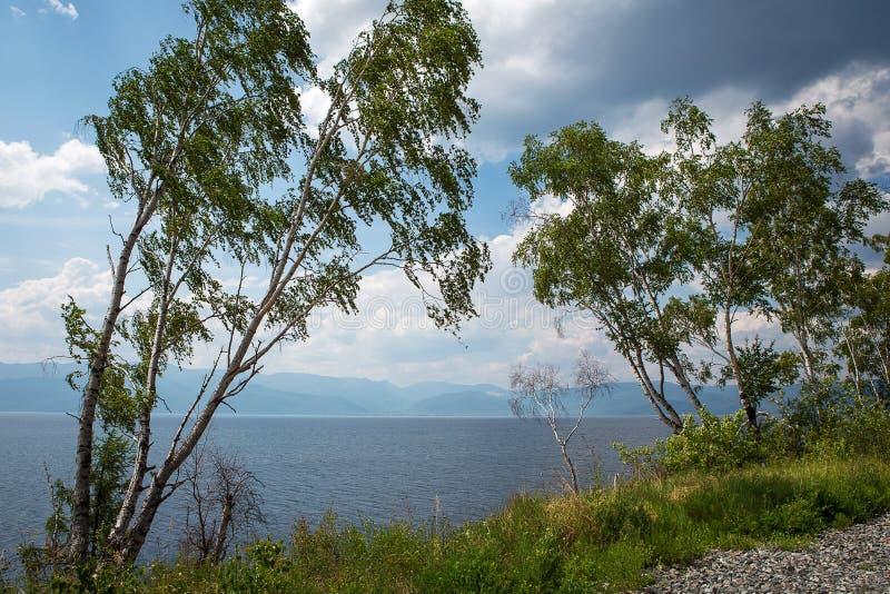 Brzozy na jeziornym, pogodnym letnim dniu, fotografia royalty free
