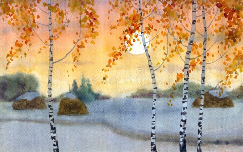 brzozy odpowiadają śnieżnego fotografia stock