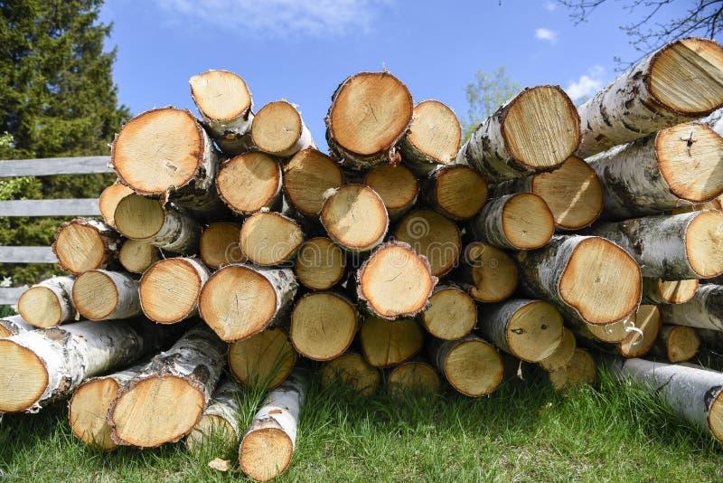 Brzozy Pożarniczy drewno obrazy royalty free