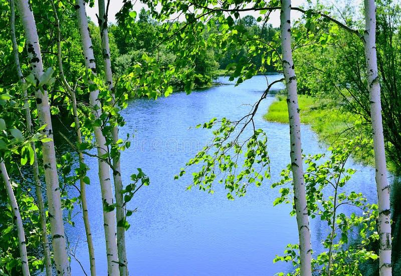 Brzozy przy błękitnym jeziorem obraz stock