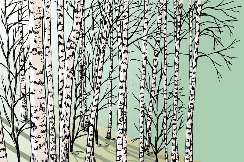brzozy ulistnienia zieleni gaj może ilustracja wektor