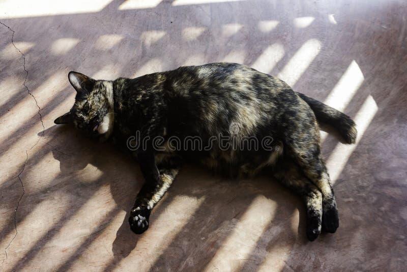 Brzucha kot na ziemi zdjęcie royalty free