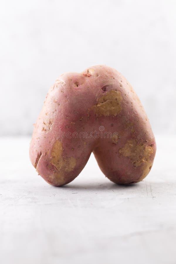 Brzydka grula w kierowym kształcie na szarym tle Śmieszny, unnormal warzywo, lub karmowego odpady pojęcie fotografia royalty free
