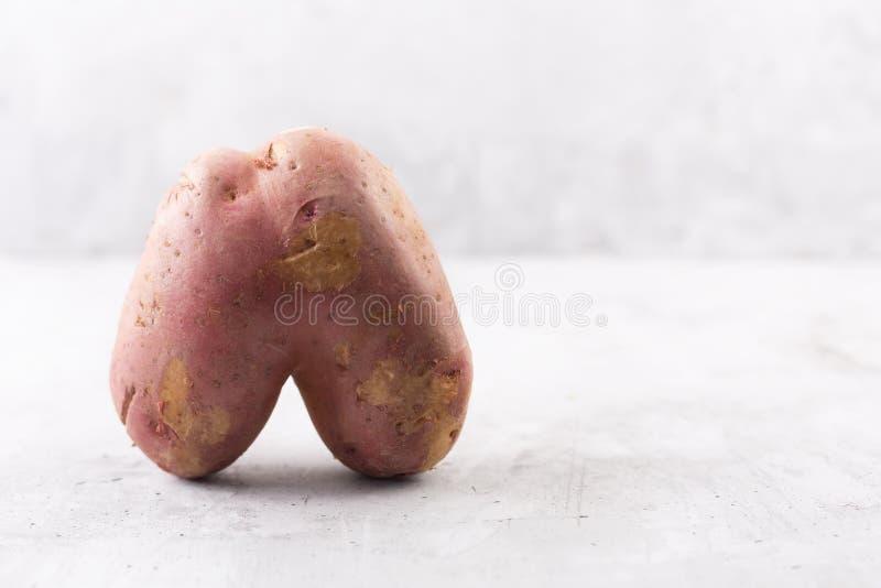 Brzydka grula w kierowym kształcie na szarym tle Śmieszny, unnormal warzywo, lub karmowego odpady pojęcie zdjęcia royalty free