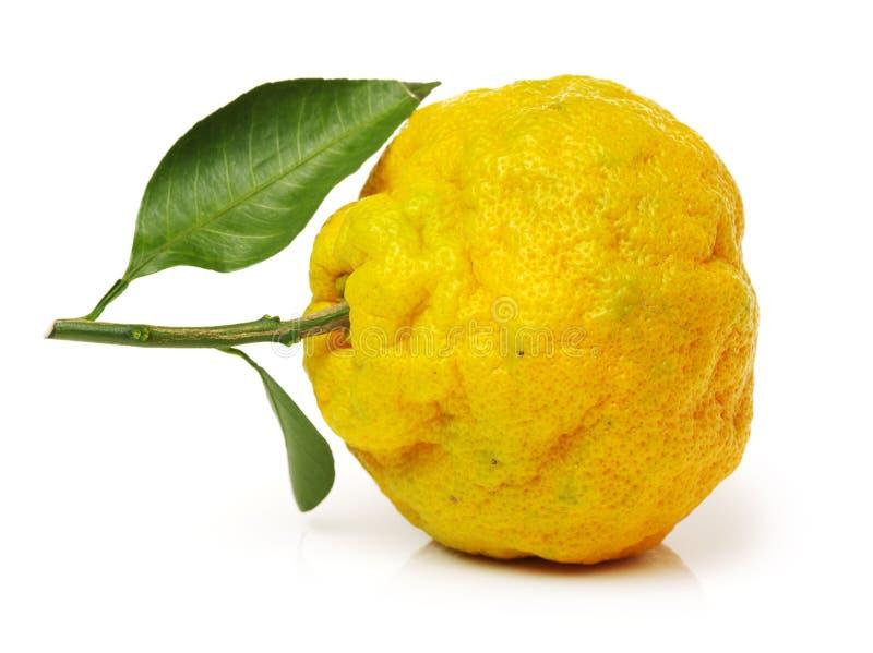 Brzydki tangerine zdjęcia stock