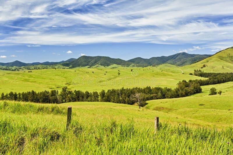 BTops Cobark Fields трава стоковая фотография rf