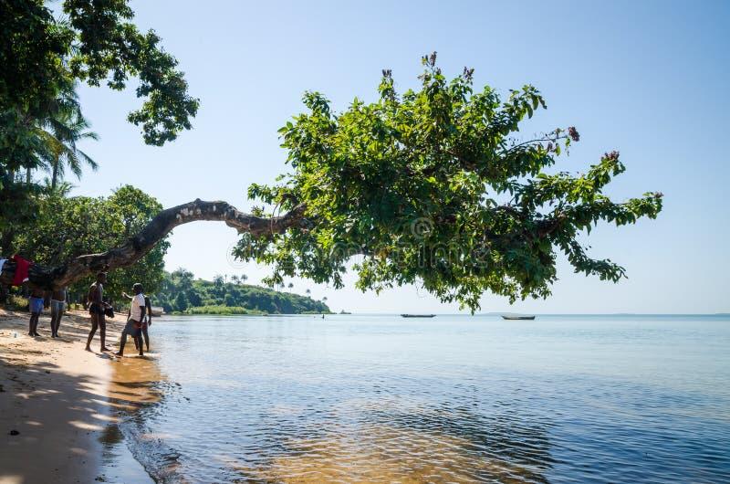 Bubaque, Guinea-Bissau - 7 dicembre 2013: Albero che cresce sopra l'oceano alla spiaggia dell'isola Bubaque, Guinea-Bissau di Bij fotografia stock libera da diritti