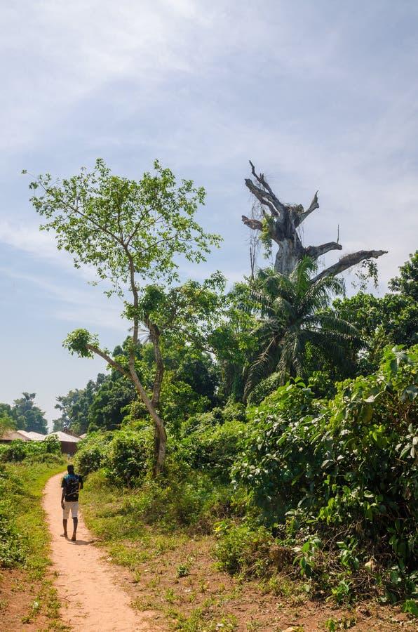 Bubaque, Guinea-Bissau - 9 dicembre 2013: Percorso morto santo dell'uomo e dell'albero a piedi sull'isola Bubaque, arcipelago di  fotografia stock libera da diritti