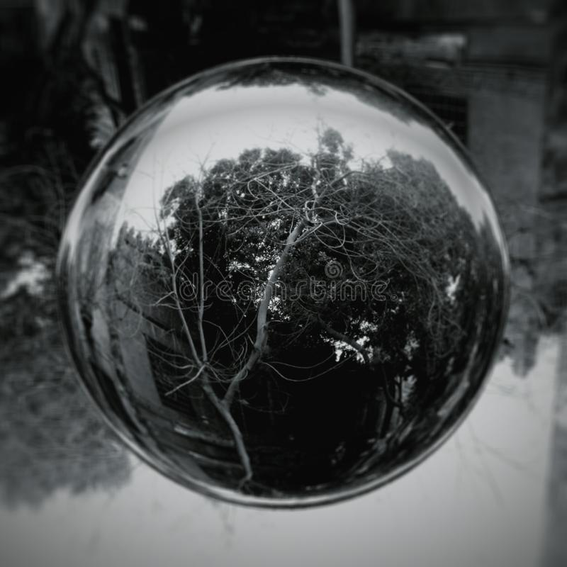 Bubble of tree stock images