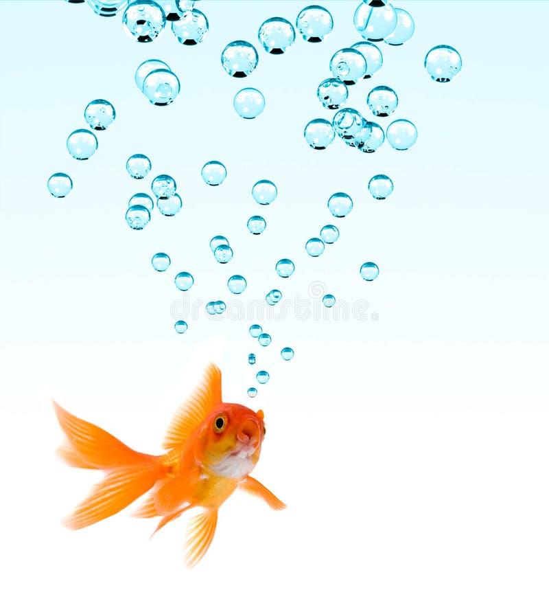 bubbles guldfisken arkivbild
