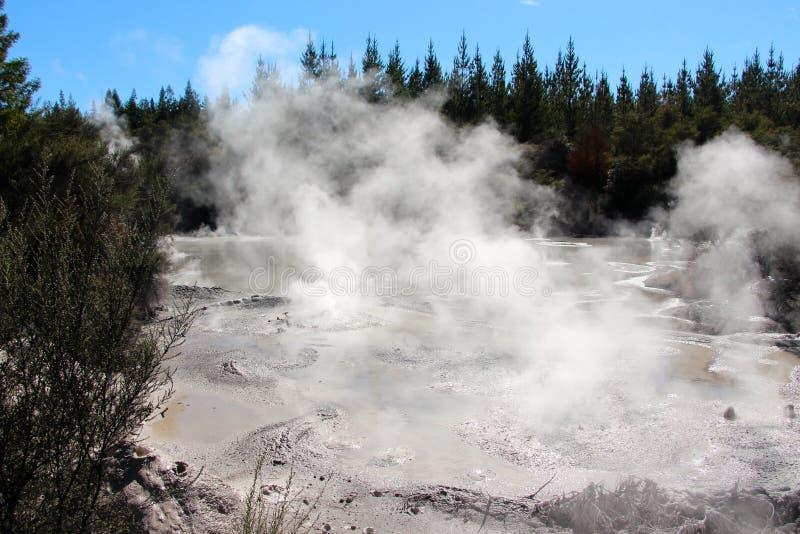 Bubbling mud pool. Rotorua New Zealand royalty free stock photos
