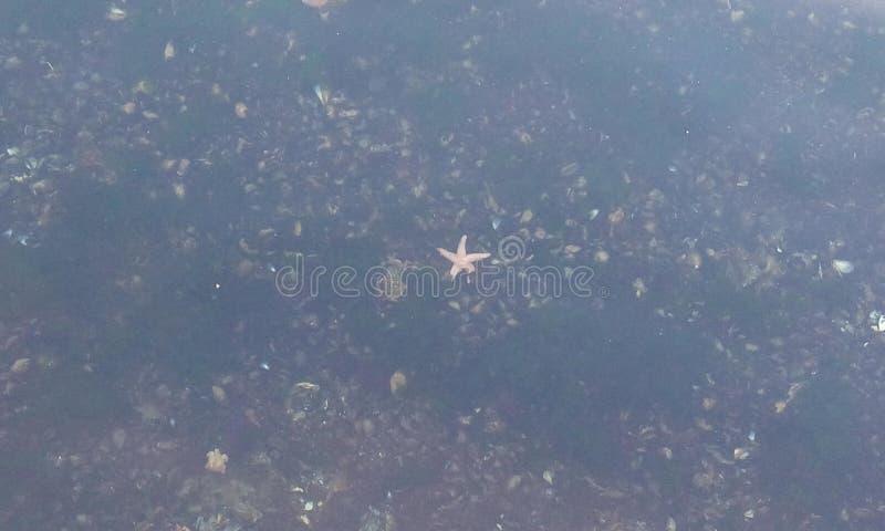 bubblor kopierar vektorn för text för avstånd för seaweeds för havet för fiskillustrationlivstid royaltyfri bild
