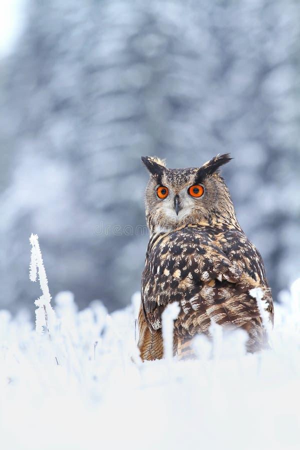 Bubobubo in sneeuw stock afbeeldingen