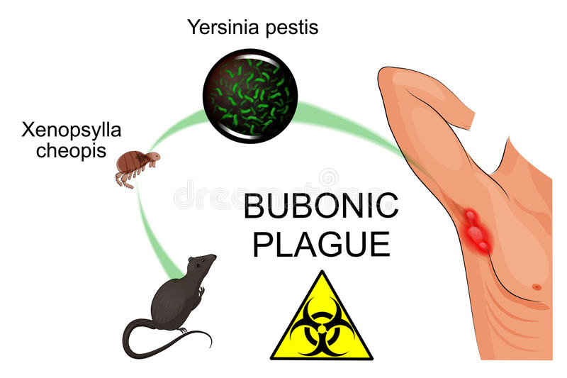 the negative and positive effects of the bubonic plague History: european term papers (paper 416) on the positive effects of the bubonic plag: the positive effects of the bubonic plague in the summer of 1665 in the hot arid east, a devastating plague wiped out a multitude of people.