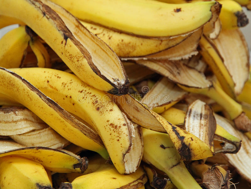 Bucce della banana nel composter per humus fotografia stock