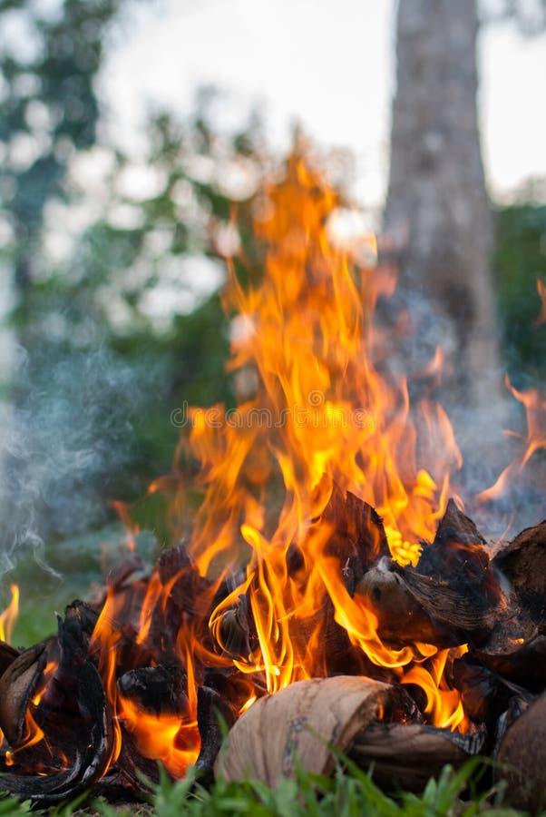 Bucce della noce di cocco con fuoco immagine stock