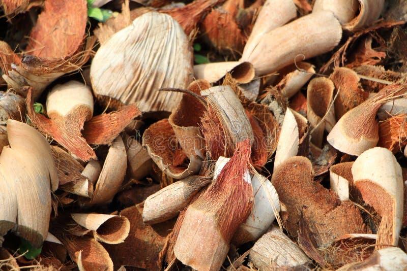 Bucce della noce di cocco di Brown immagini stock