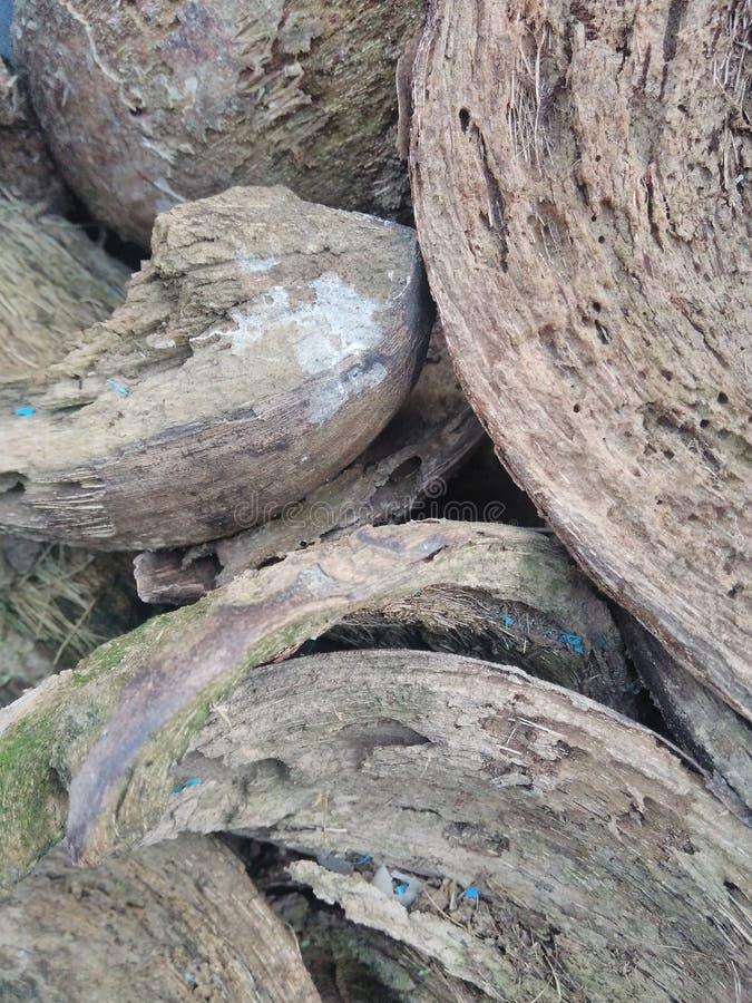 Buccia della noce di cocco fotografia stock