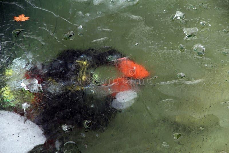 Buceador bajo 20 capas del cm de hielo del lago en invierno foto de archivo libre de regalías
