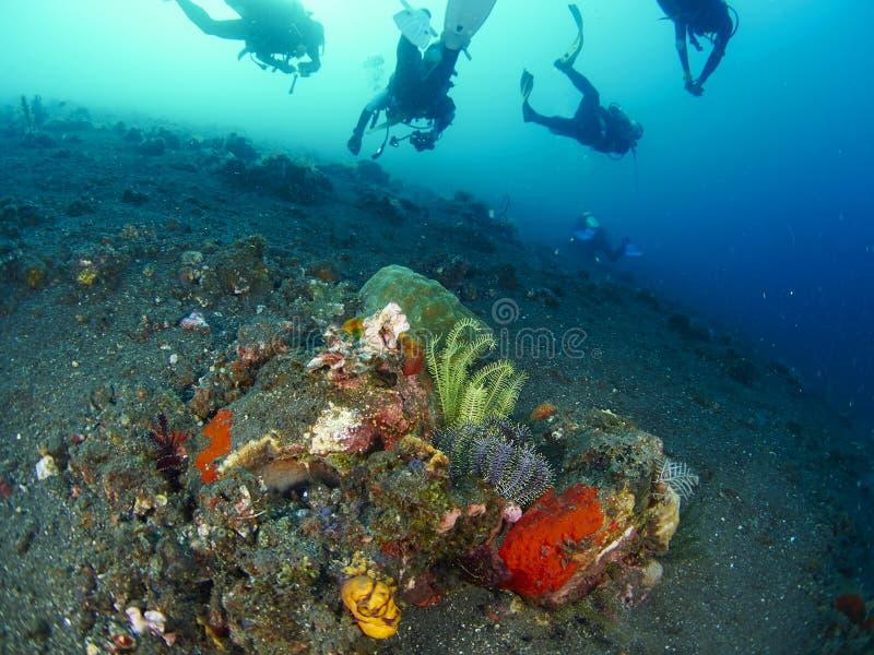 Buceador con el coral foto de archivo