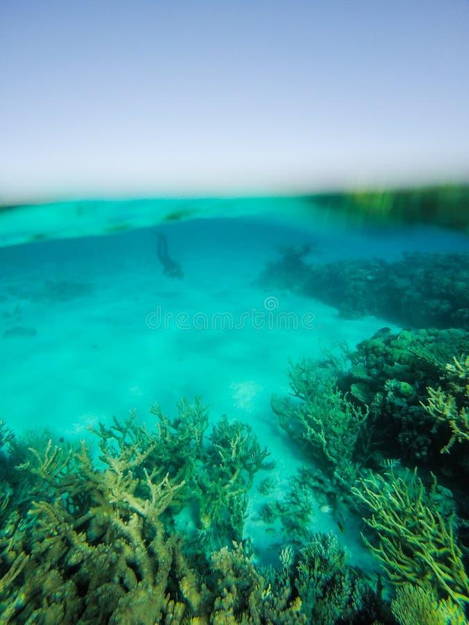 Buceador Diving en el agua transparente del filón bajo del Mar Rojo fotos de archivo libres de regalías