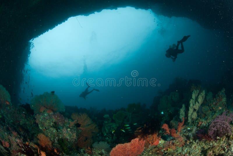Buceador, fan de mar en Ambon, Maluku, foto subacuática de Indonesia fotos de archivo