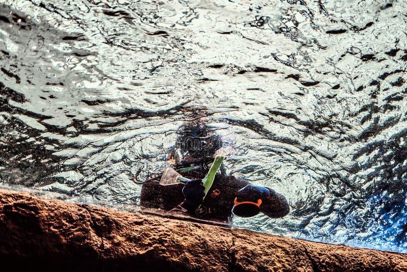 Buceador que flota cerca de la superficie del agua al lado de la orilla rocosa Visión inferior imagenes de archivo