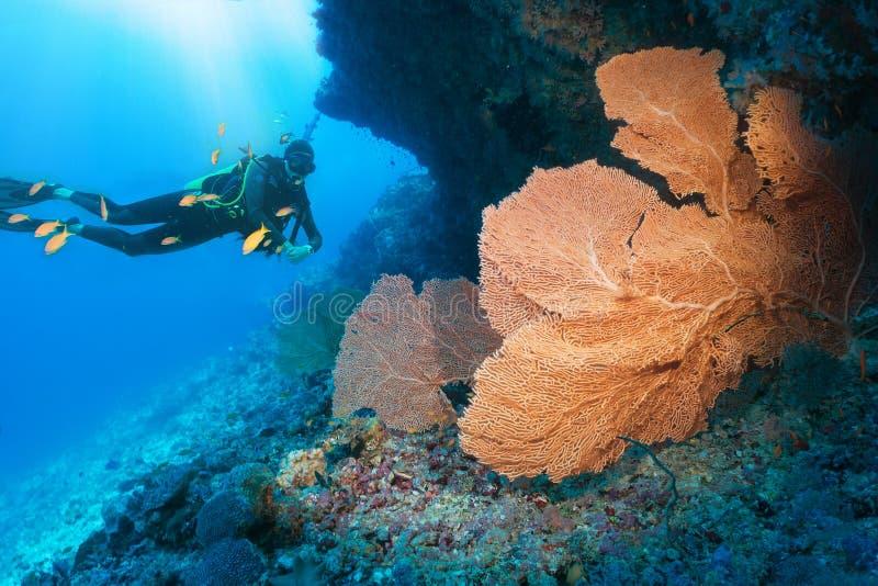 Buceador que mira un coral grande de la fan en el Océano Índico imagen de archivo