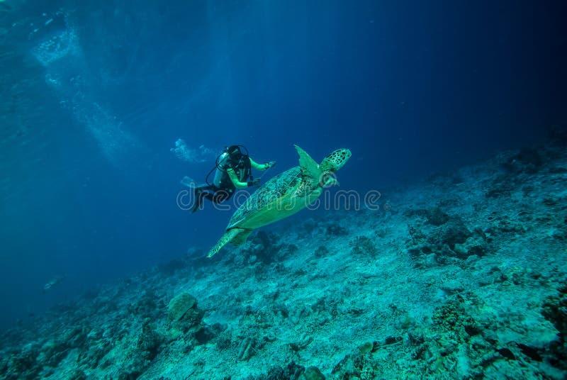 Buceador y tortuga de mar verde en Derawan, foto subacuática de Kalimantan, Indonesia fotos de archivo